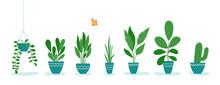 Set Of Office Plants In Pots. ...