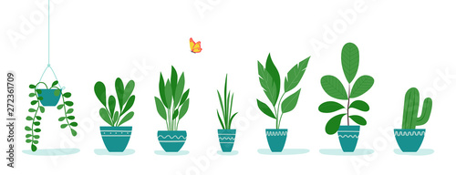 Set of office plants in pots.  Vector flat style illustration
