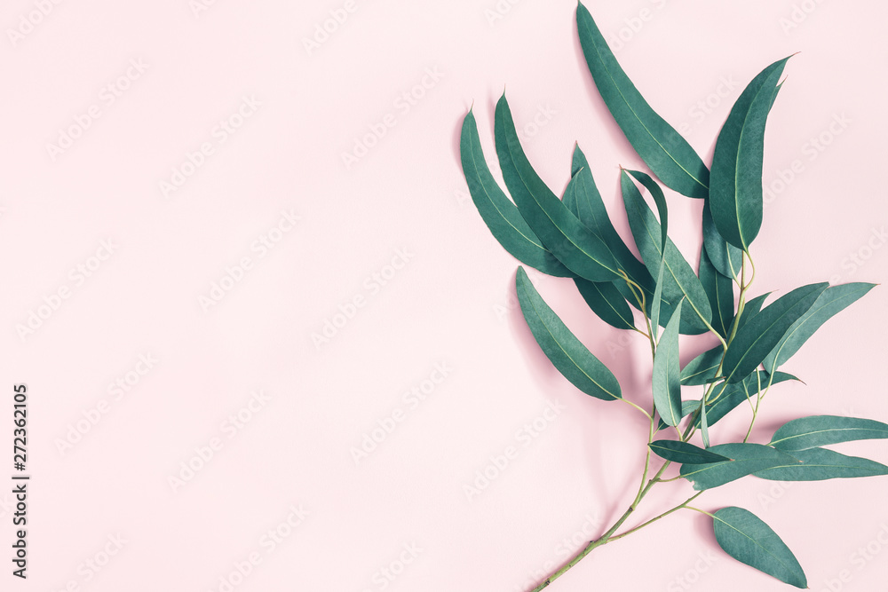 Fototapety, obrazy: Flowers composition. Eucalyptus leaves on pastel pink background. Flat lay, top view, copy space