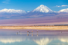 The Chaxa Lagoon With Andean F...