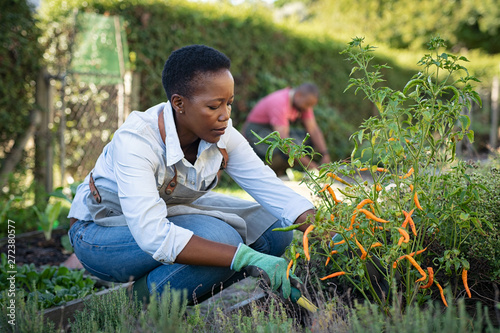 Fotografie, Obraz  African woman grows plants in the garden