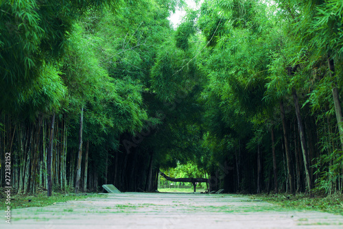 Foto op Canvas Bamboo Bamboo forest and pathway