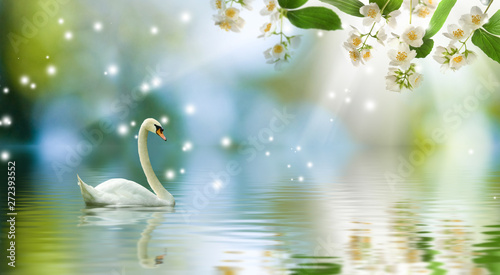 Poster Cygne image of swan on the water