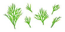 Set Of Isolated Dill Sprigs