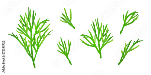 Tela Set of isolated dill sprigs