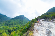 One Tourist Climbing Sibayak V...