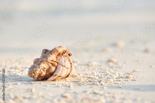 Hermit crab on a beach at Maldives Fototapete