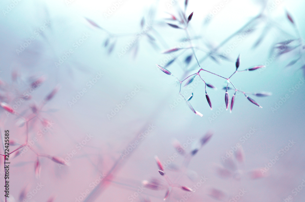 Abstract soft translucent atmospheric natural background in pastel light colors. Blooming field grass close-up macro in blue and pink tones. gentle artistic image, copy space.