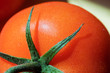 Bright ripe juicy tomato closeup. The concept of vegetarianism, growing vegetables, healthy eating, food rich in vitamins. Summer concept. Tomato on the branch.