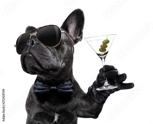 Ingelijste posters Franse bulldog drunk dog drinking a cocktail