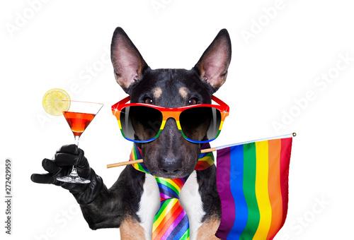 La pose en embrasure Chien de Crazy gay pride dog
