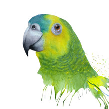Watercolor With  Green Amazon Parrot