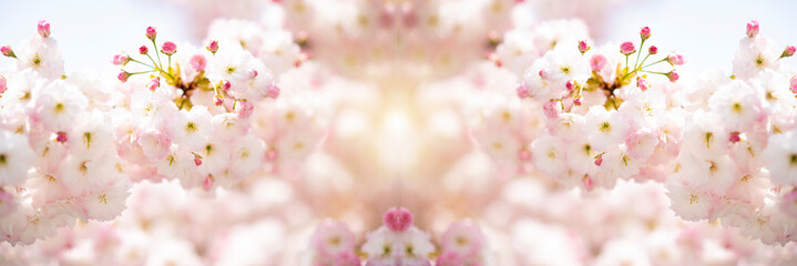 fiori di ciliegio in primavera