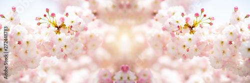 Fotografija  fiori di ciliegio in primavera