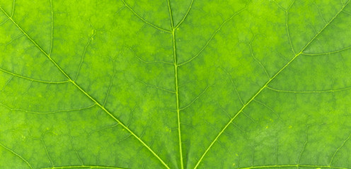 Green leaves closeup backgr...