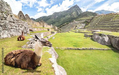 Brown and white lama resting on green meadow at Machu Picchu archaeological ruin Canvas Print