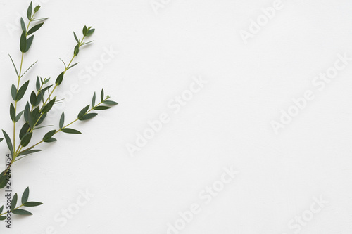 Printed kitchen splashbacks Floral Minimalist floral composition. Eucalyptus on white background. Aroma therapy. Copy space.