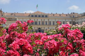 villa reale e piante di rose monza in italia, royal villa and rose plants in monza city in italy