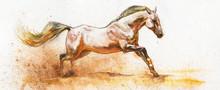 Watercolor White Horse