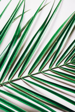 Palm Leaf On Pink Background