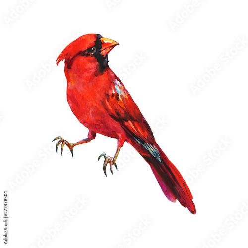 Cuadros en Lienzo Watercolor cardinal bird