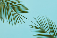 Border Or Banner Of Green Palm...