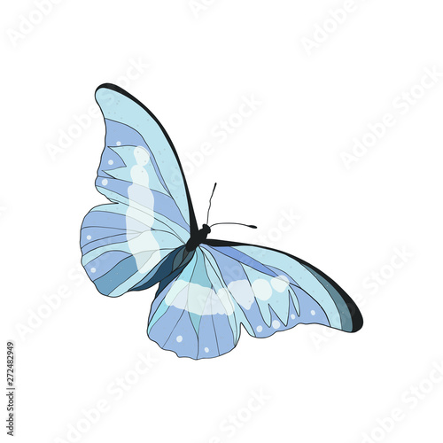 Fotografie, Obraz  Cute Blue Butterfly isolated on white.