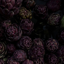 An Assemblage Of Protea In Dark Purple