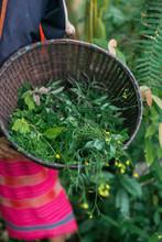 Karen Villagers Harvest Vegetables And Herbs