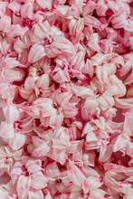 Close Up Of Hyacinth Flower