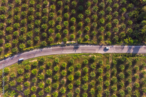 Valokuvatapetti Aerial view of road in center of palm tree plantation