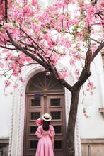 Young Woman Walking Under Sakura Tree
