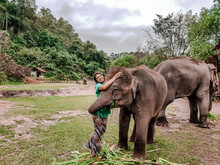 Girl Having Fun With Elephants...