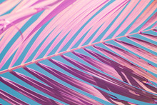 Pink Palm Frond