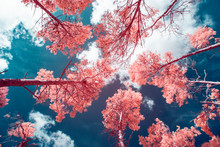 Looking Up Through The Trees, Infrared