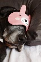 Dog In Mask Sleeping