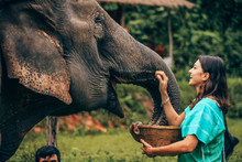Girl Having Fun With Elephants At Patara Elephant Farm, Chiang Mai, Thailand