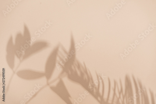 Top view of green tropical leaf shadow on sand color background. Flat lay. Minimal summer concept with palm tree leaf. Creative copyspace. - 272499509