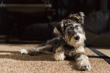 Quizzical Dog Lying On Sisal Mat In Sunlight Indoors