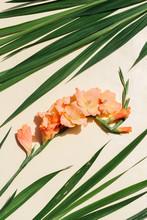 Pastel Orange Gladiolus