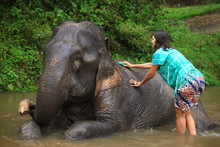 Girl Having Fun With Elephants...
