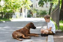Playful Boy With Purebred Dog On Street