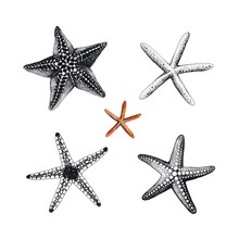 Starfishes Hand Drawn Set, Vector Illustration. Collection Sea Design Elements.