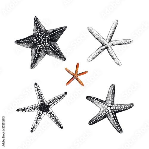 Photo Starfishes hand drawn set, vector illustration