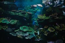 Rich Reef