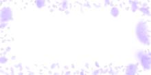 Violet Flower Petals Falling Down. Amusing Romanti