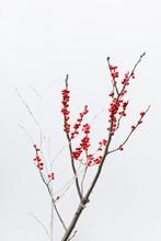 Winterberry Decoration