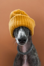 Dog With A Wool Hat