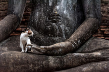 Cat Sitting On The Lap Of A Buddha Statue In Sukhothai Historical Park, Thailand.