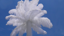White Ostrich Feather In Vase And Blue Sky - Wedding Decoration Details.